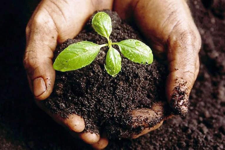 A plantar 4.5 millones de árboles en la Amazonía